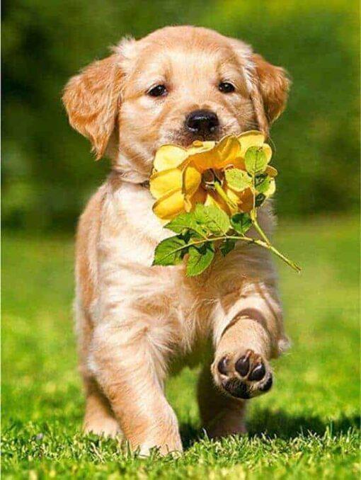 labrador puppy met een bloem seos shop