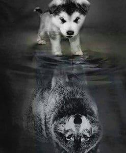 wolven welp naar volwassen wolf